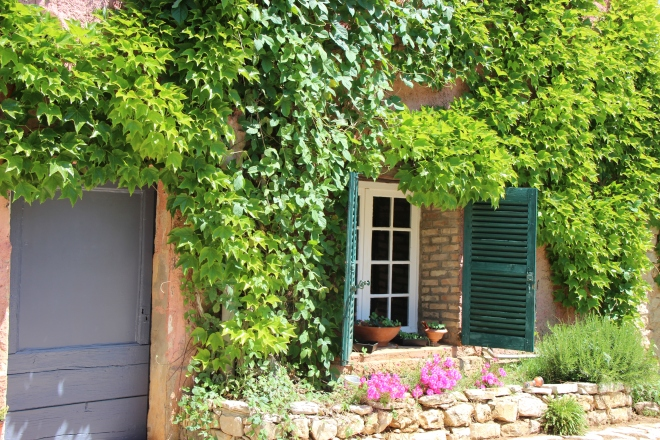 Virginia Creeper and Morning Glory take over!
