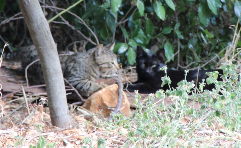 My little kitty cats playing in garden