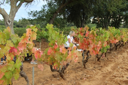 Vines changing colour