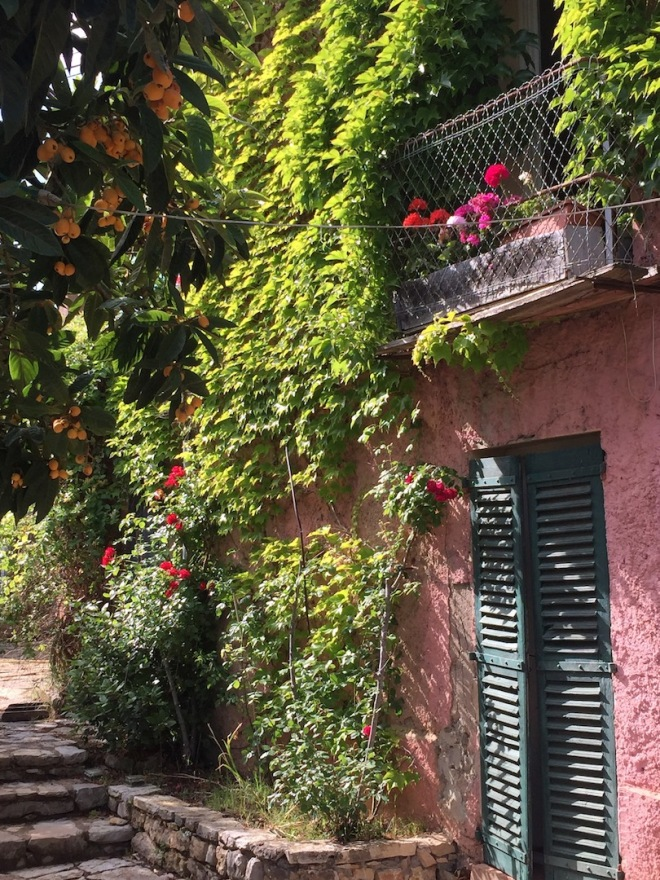 Our house in Provence and the Medlar full of fruit.jpg