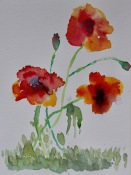 Chris's left handed poppies