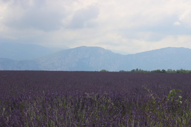 Lavender to infinity