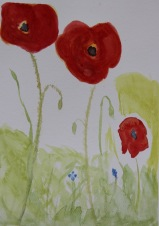 Sandra's poppies