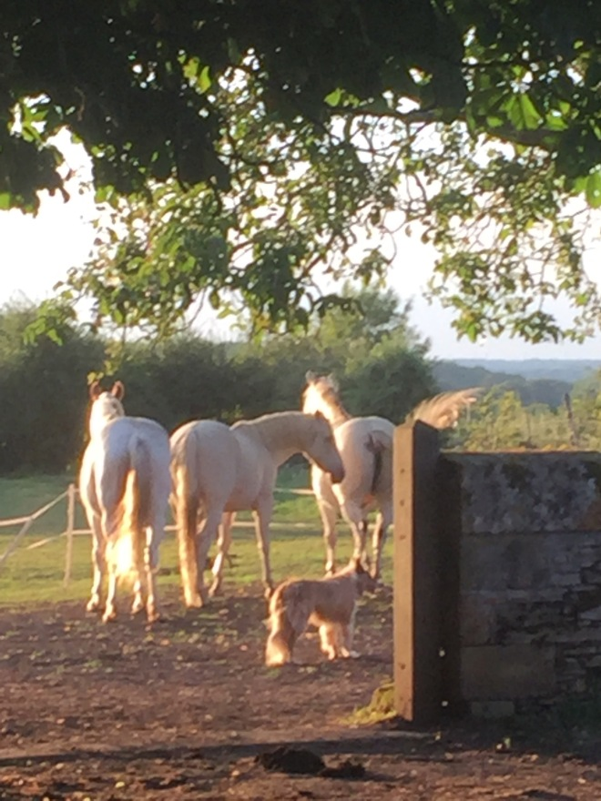 Jan's horses in the sunlight with Brook