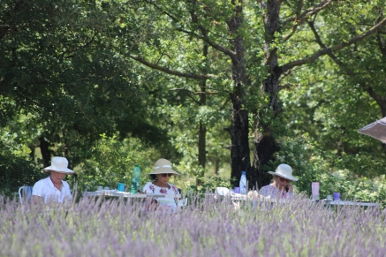painting lavender fields in provence